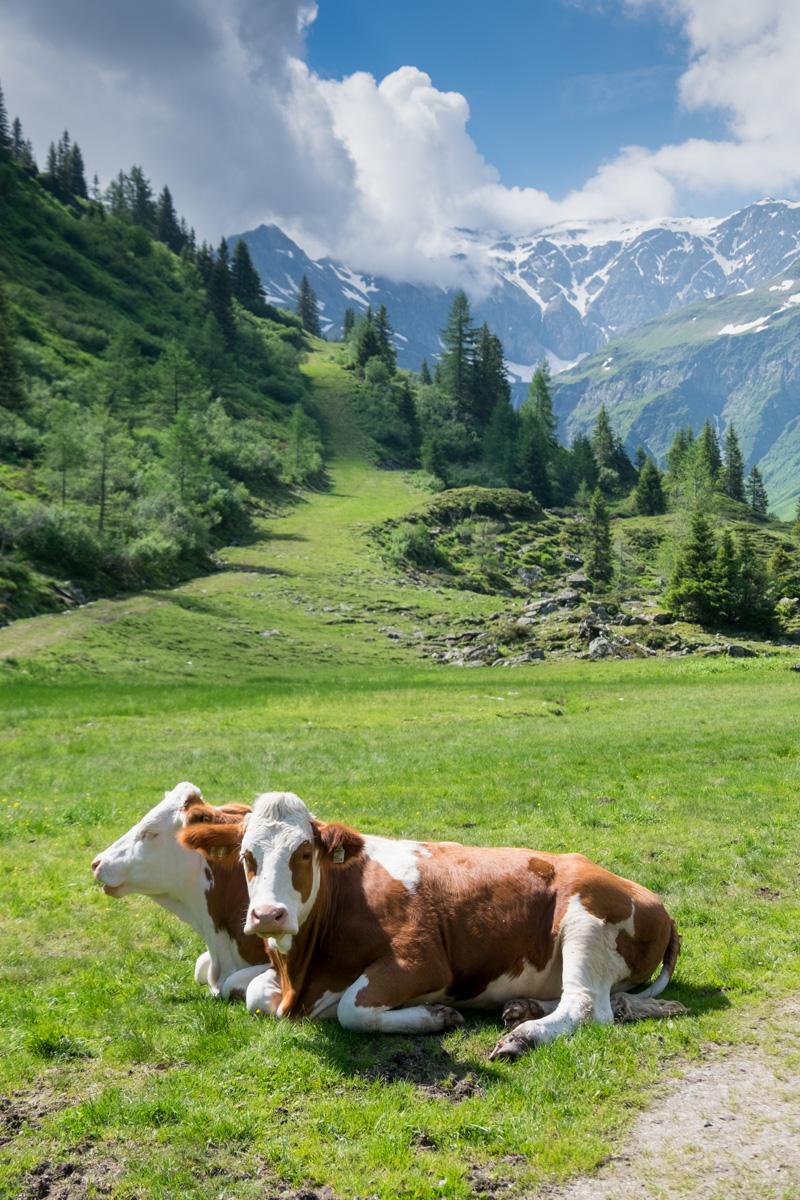 Bekanntschaften in Bad Gastein - Partnersuche & Kontakte