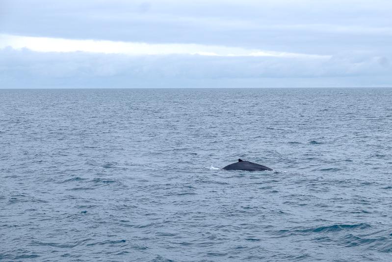 Whale Watching Husavik | © individualicious