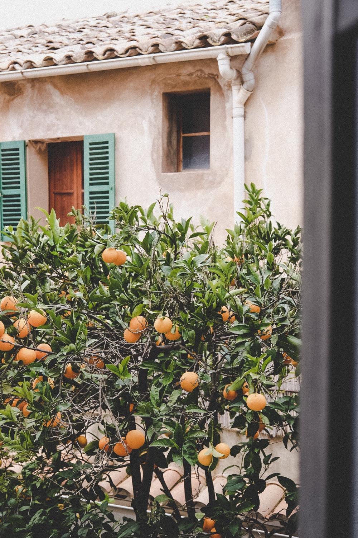 Hotel Ca's Papà, Mallorca | © individualicious